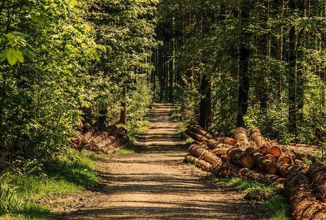 lesní cesta se dřevem